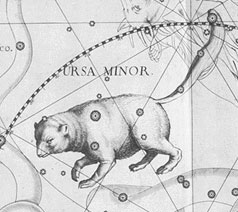 Ursa Minor, the Lesser Bear